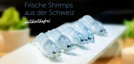 Shrimps, eine Schweizer Spezialität